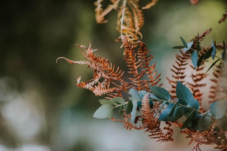 feuillage automne eucalyptus fougère mariage naturel capucine atelier floral