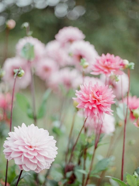 mariage-alsace-strasbourg-fleuriste-capucineatelierfloral-fleur-champetre-11