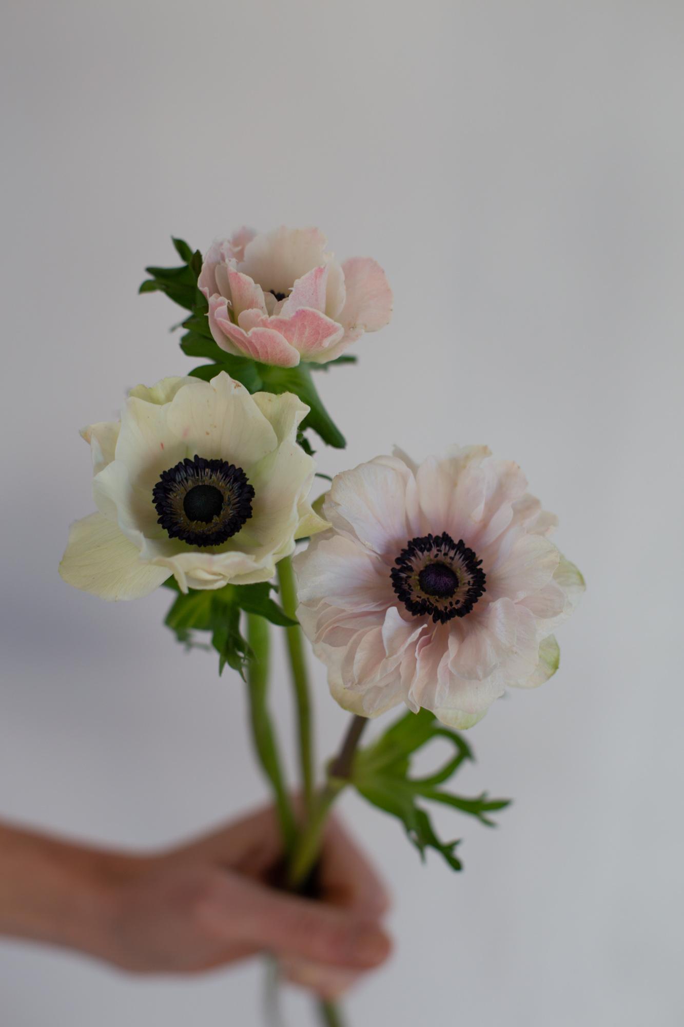 Anémone du Var - fleurs pour mariage