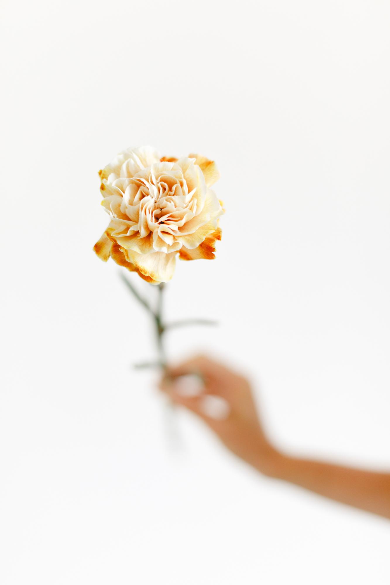 oeillet teinte viproses formation fleuriste financee
